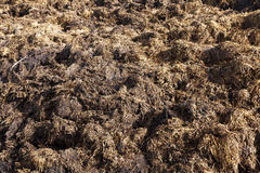 Are landed in a pile of manure Royalty Free Stock Photos