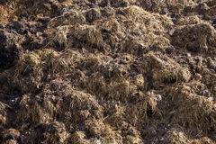 Are landed in a pile of manure Royalty Free Stock Image