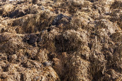 Are landed in a pile of manure Stock Images