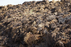 Are landed in a pile of manure Royalty Free Stock Photography