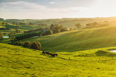 Landelijk Australië Stock Foto