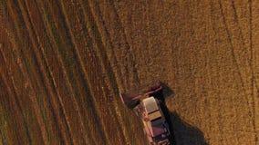Landelijk combineer het Werken aan Boekweitgebied stock videobeelden