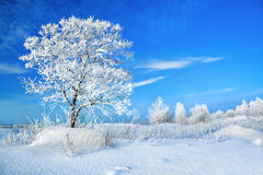 Landelijk de winterlandschap met een één boom en de blauwe hemel Stock Foto