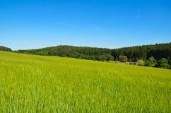 Landelijk de zomerlandschap met gebied en bos op horizon royalty-vrije stock foto's