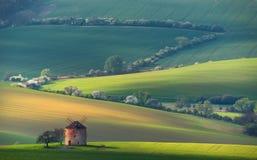 Landelijk de Zomerlandschap met Oude Windmolen en Witte het Bloeien TreesnBeautiful Zonsondergang boven de Oude Windmolen op Groe Stock Afbeelding