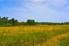 Landelijk de zomerlandschap Typische Europese pastorale weide, weiland, gebied Illustratie van landbouw Stock Fotografie