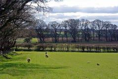 Landelijk Engels Landschap Stock Foto's