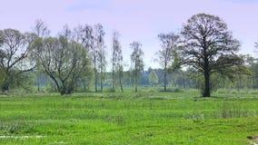 Landelijk, Europees landschap stock footage