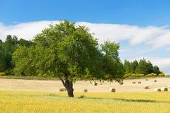 Landelijk Frans landschap Stock Afbeeldingen