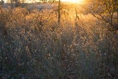 Landelijk Gebied bij Zonsondergang Stock Fotografie