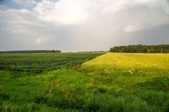 Landelijk gebied, het oogsten Stock Afbeeldingen