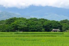 Landelijk groen gebied Stock Afbeeldingen