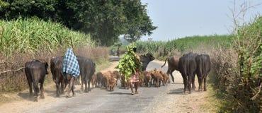 Landelijk India Stock Fotografie