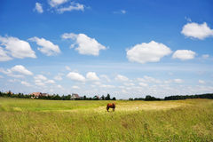 Landelijk landschap Royalty-vrije Stock Foto