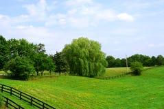 Landelijk landschap Stock Fotografie
