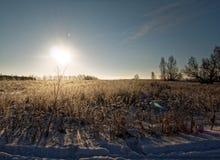 Landelijk landschap in de winter Royalty-vrije Stock Afbeeldingen
