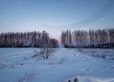 Landelijk landschap in de winter Royalty-vrije Stock Foto