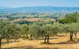 Landelijk landschap die Assisi, Umbrië, centraal Italië omringen stock afbeeldingen
