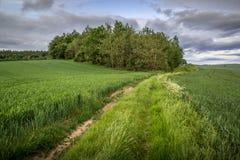 Landelijk landschap die een groep bomen op een fieldd van groen Fr tonen Royalty-vrije Stock Fotografie