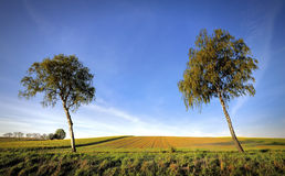 Landelijk landschap Gebied en gras Stock Foto