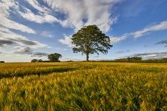 Landelijk landschap Gebied en gras Royalty-vrije Stock Afbeelding
