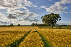 Landelijk landschap Gebied en gras Royalty-vrije Stock Foto
