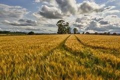 Landelijk landschap Gebied en gras Royalty-vrije Stock Fotografie