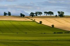 Landelijk landschap Gebied en gras Stock Fotografie
