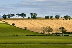 Landelijk landschap Gebied en gras Royalty-vrije Stock Foto's