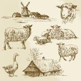 Landelijk landschap, landbouwbedrijfdier Stock Foto's