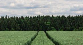 Landelijk landschap Landwegpassen door Stock Fotografie