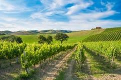 Landelijk landschap met een groene wijngaard onder heuvels royalty-vrije stock foto's