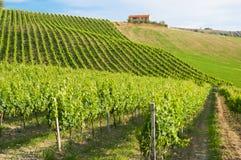 Landelijk landschap met een groene wijngaard onder heuvels stock afbeelding
