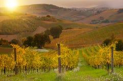 Landelijk landschap met een groene wijngaard onder heuvels stock afbeeldingen