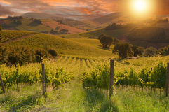 Landelijk landschap met een groene wijngaard op zonsondergang royalty-vrije stock afbeeldingen