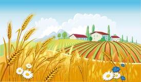 Landelijk landschap met gebieden Stock Afbeelding
