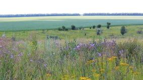 Landelijk landschap met gras en groen gebied stock footage