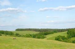 Landelijk landschap met koe Royalty-vrije Stock Afbeeldingen