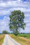 Landelijk landschap met smalle weg door de gebieden op een de zomerdag, Rafels, België royalty-vrije stock foto's