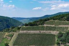 Landelijk landschap met wijngaarden en heuvels Royalty-vrije Stock Afbeelding