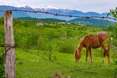 Landelijk landschap op de achtergrond van bergen royalty-vrije stock fotografie