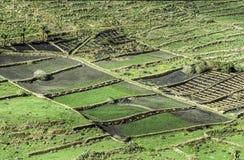 Landelijk landschap op het Eiland Lanzarote Stock Fotografie