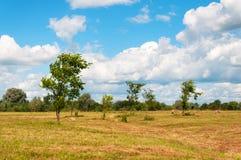 Landelijk landschap van gebied van hooibergen onder bewolkte hemel Stock Foto's