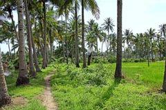 Landelijk Landschap van Goa India stock afbeelding