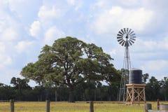 Landelijk landschapslandschap in Texas, de Verenigde Staten van Amerika Eiken boom en windmolen op landbouwgrond, Texan Boerderij stock afbeelding