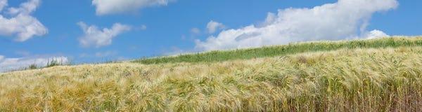 Landelijk landschapspanorama Stock Afbeeldingen
