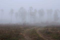 Landelijk Mistig Landschap in de herfst stock foto's