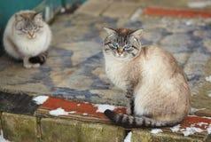 Landelijke binnenlandse katten de winter groot portret op de straat Royalty-vrije Stock Afbeelding