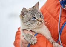 Landelijke binnenlandse katten de winter groot portret op de straat Royalty-vrije Stock Fotografie