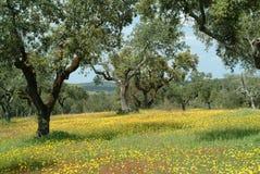 Landelijke de lentetijd Stock Foto